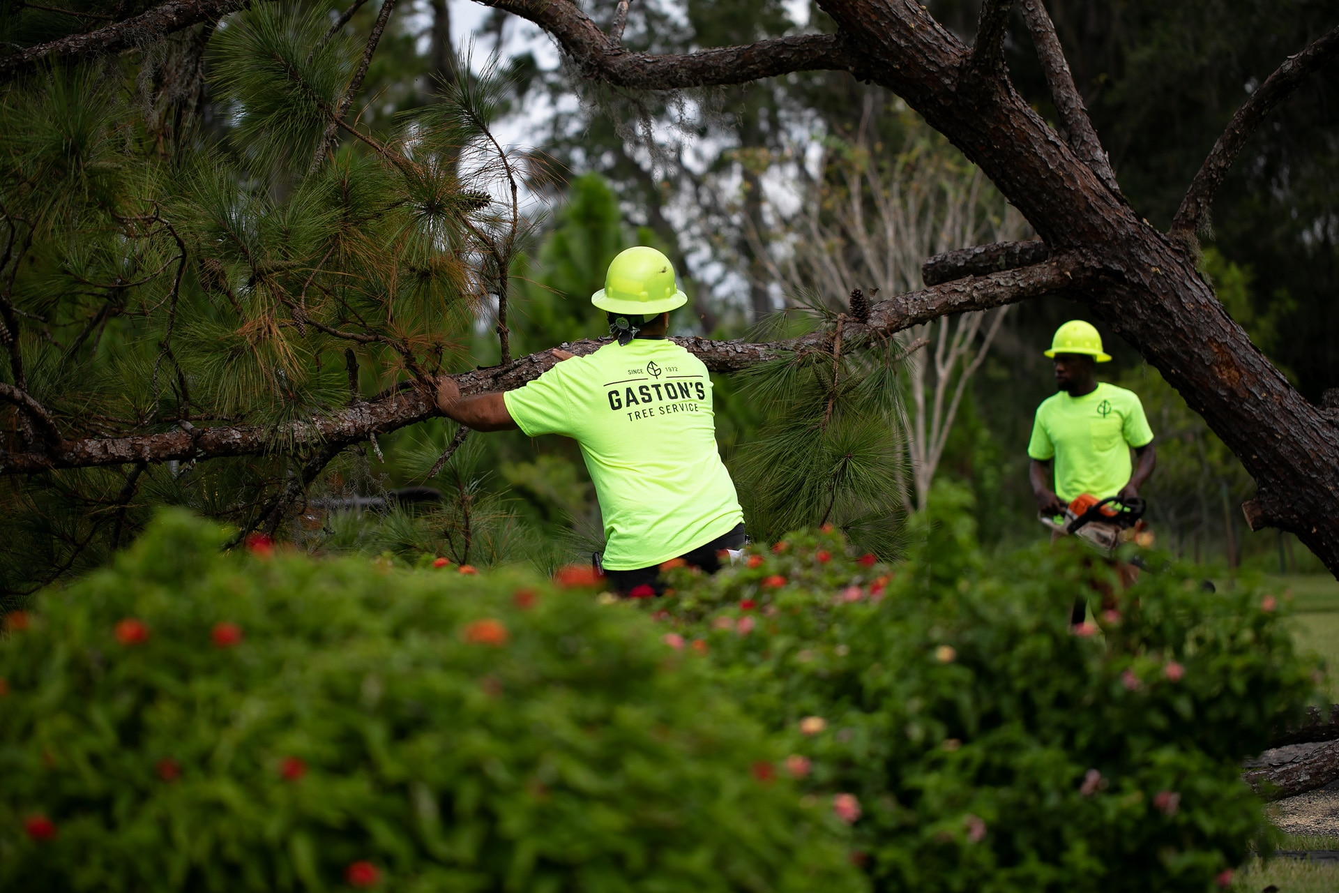 Workers moving tree limbs for Gaston's Tree Service