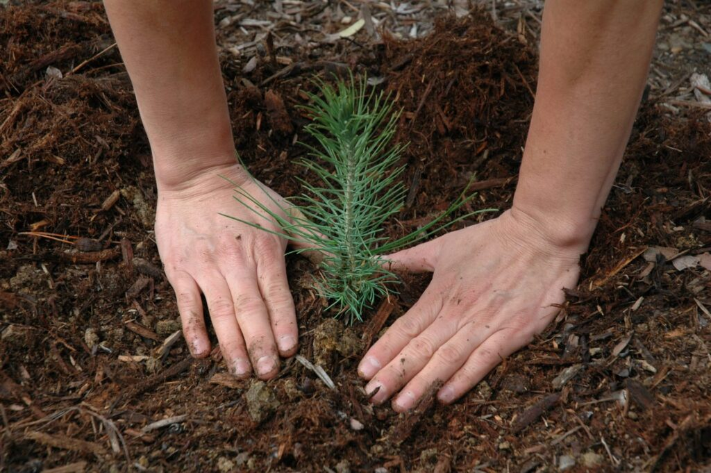 A person planting a small plant into soil
