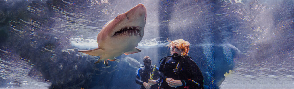 People scuba diving underwater with sharks